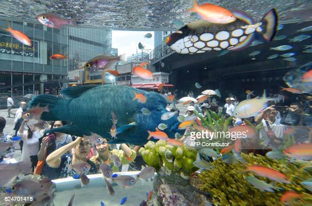 A humpead wrasse and a clown triggerfish transported from Japan's southern island of Okinawa swim with other tropical saltwater fish on display in a...
