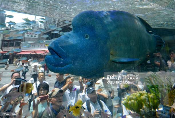 TOPSHOT A humpead wrasse transported from Japan's southern island of Okinawa swims with other tropical saltwater fish on display in a tank for the...