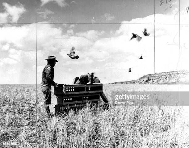 MAY 8 1970 MAY 10 1970 ' Hun ' Partridge Released For the sixth year Hungarian partridge have been released by the Colorado Game Fish and Parks...