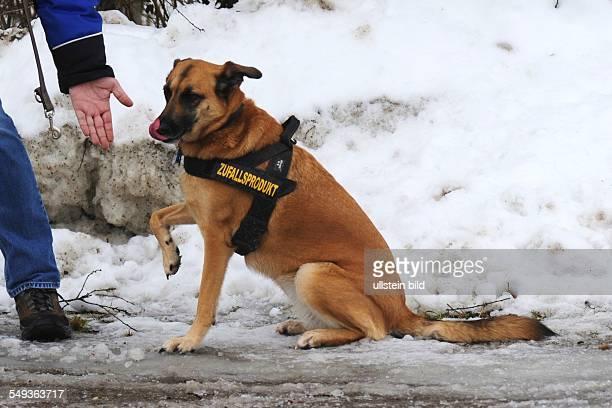 Hund gibt Pfötchen auf der Hundeleine die Aufschrift Zufallsprodukt