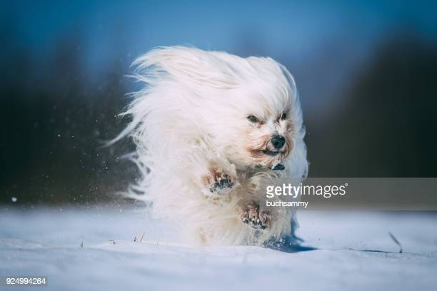 hund im schnee - schnee stock pictures, royalty-free photos & images