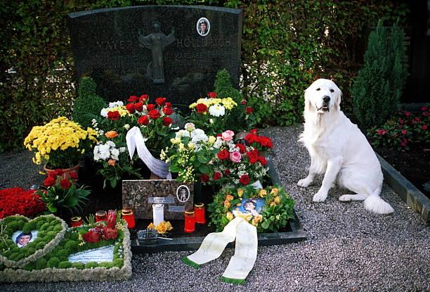 Hund \'Sir Henry\' (\'Golden Retriever\' aus Kiel, lebt bei Friedhel ...