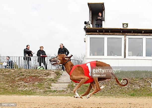 Hunderennen in Roitzsch CAC JAS Windhunderennen