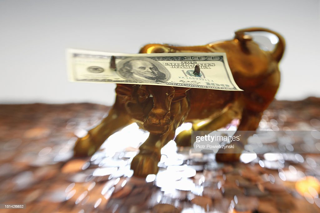 A hundred dollar bill on the horns of a model bull : Stock Photo
