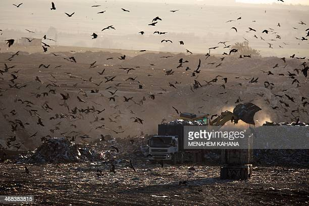 Hundreds of black kites fly over one of the biggest garbage dumps in Israel Dudaim near the southern Israeli city of Beersheva on February 10 2014The...