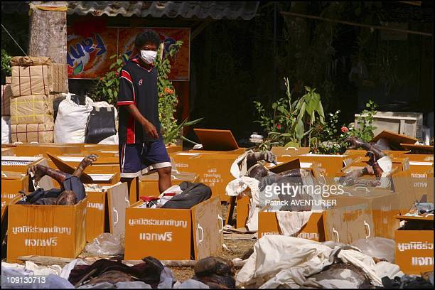 Hundreds Of Corpses Killed By Tsunami Waiting To Be Identified In A Buddhist Temple Near Khao Lak On December 29 2004 In Khao Lak India