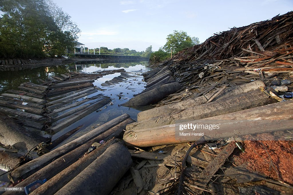 Hundreds of logs choke a river on the outskirts of Buenaventura, Colombia. Authorities worry that illegal logging may be filling the coffers of the nation's largest guerrilla group, the FARC.