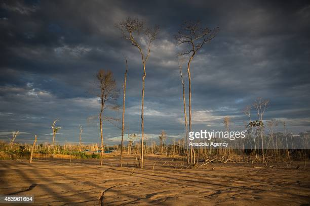 Hundreds of police officers attend an operation in illegal gold mining area of La Pampa in Madre de Dios southern Peruvian jungle on July 13 2015 In...