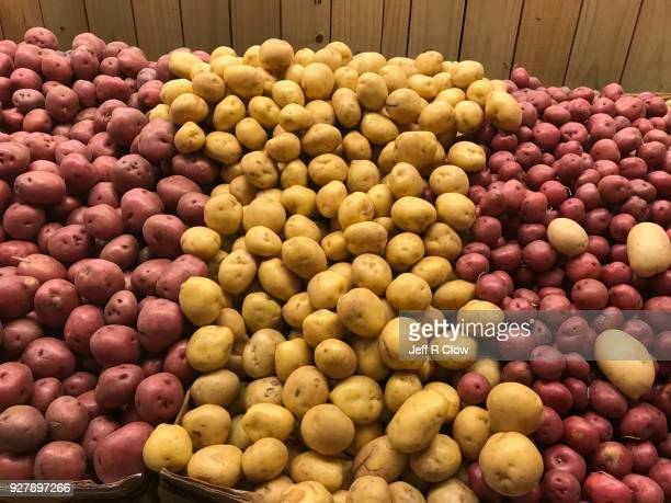 Hundreds of Raw White and Red Potatoes Side by Side