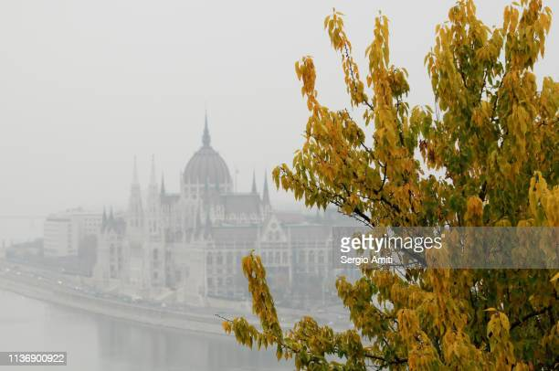 Hungarian Parliament and autumn tree