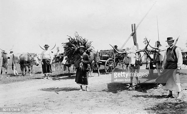 Hungarian peasants return from the field undated probably in the 1910's