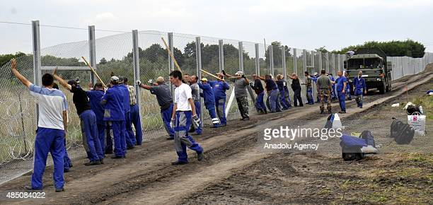 Hungarian workers put wire fences on the Hungary Serbia border line to prevent illegal immigration in Hungary on August 24 2015