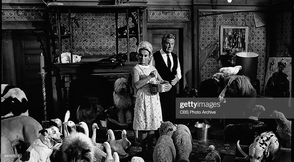 Hungarian-born actress Eva Gabor (1919 - 1995), stirs a pot as she stands next to American actor Eddie Albert (1906 - 2005) in a living room full of farm animals in a scene from the television series 'Green Acres,' California, 1965.