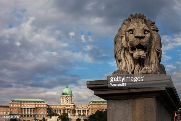 hungary, budapest, lion sculpture on chain bridge and buda castle in background - royal palace budapest stock pictures, royalty-free photos & images
