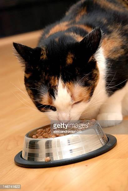 De hambre cat