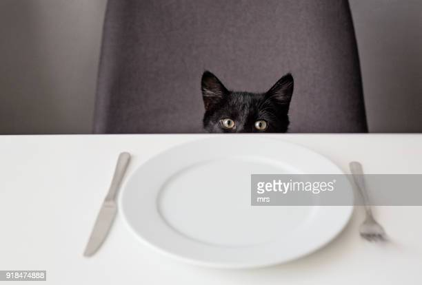 hungry cat - hongerig stockfoto's en -beelden