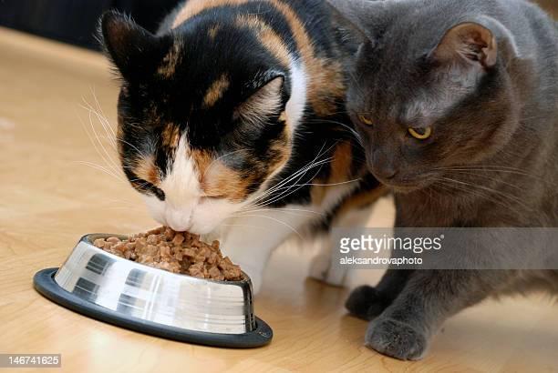 Hambre de gatos