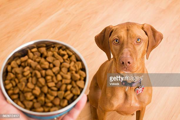 Hungry dog looking at bowl of food