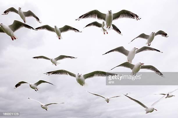 Hungry Seagulls (XXXL)