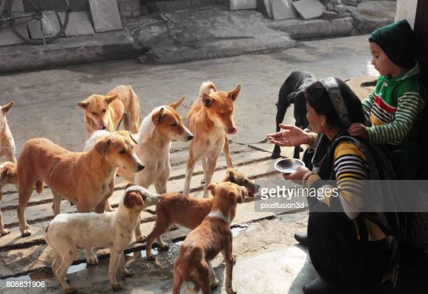 hungry street dogs - stray animal stock pictures, royalty-free photos & images