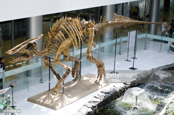hunnu mall - esqueleto animal - fotografias e filmes do acervo