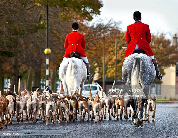 hunt master with hounds - animal welfare stock photos and pictures