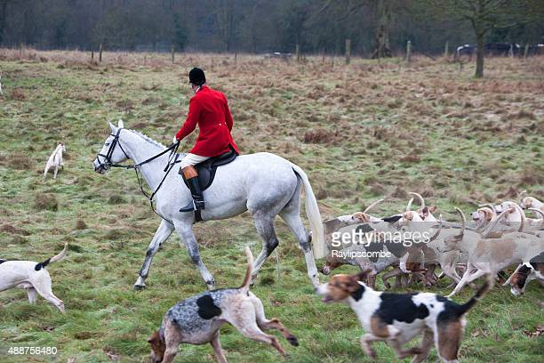 hunt master with the pack of hounds - fox hunting stock pictures, royalty-free photos & images