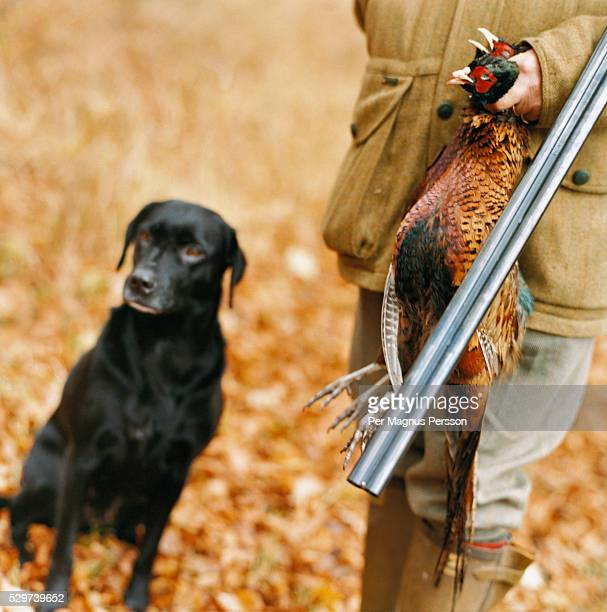 Hunter and hound with pheasant kill