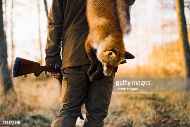 hunter carrying fox - sport involving animals stock pictures, royalty-free photos & images