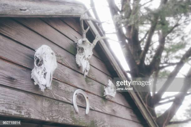 Hunter Deer Skulls And Horseshoe