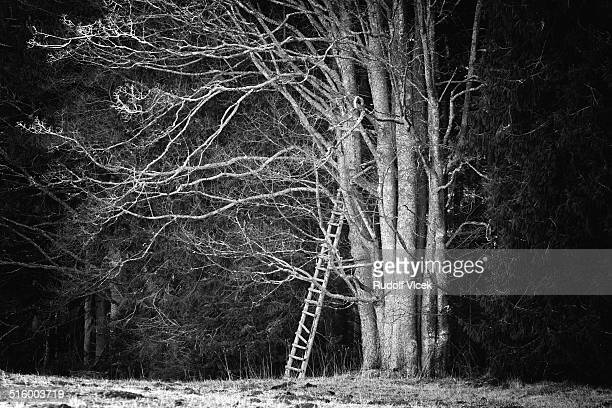 hunter high seat on an old tree - czech hunters stock photos and pictures
