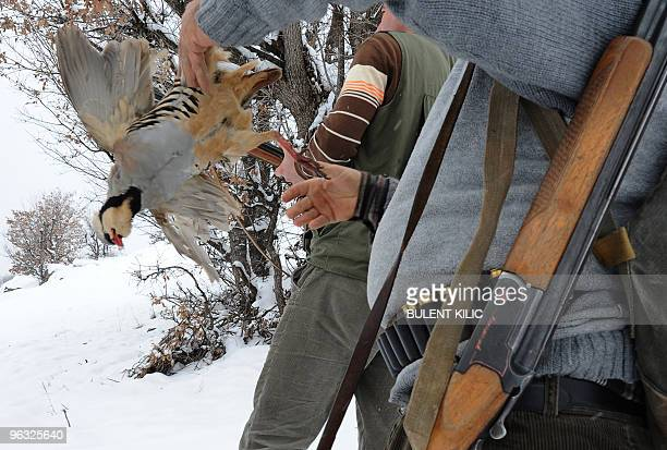 A hunter holds a partridge after it was shot in the mountains of the eastern Turkish city of Tunceli on January 30 2010 Partridges are one of the...
