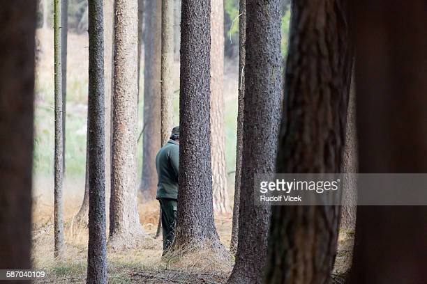 hunter in a coniferous forest - czech hunters stock pictures, royalty-free photos & images