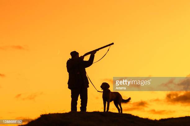 Hunter in meadow at sunset / sunrise shooting with hunting rifle / shotgun and Weimaraner dog silhouetted against orange sky.