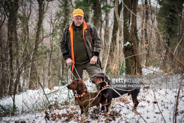 hunter in the woods - hunting dog stock pictures, royalty-free photos & images