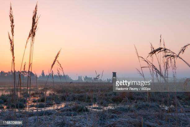 hunter lookout tower on the field at sunrise - czech hunters stock photos and pictures