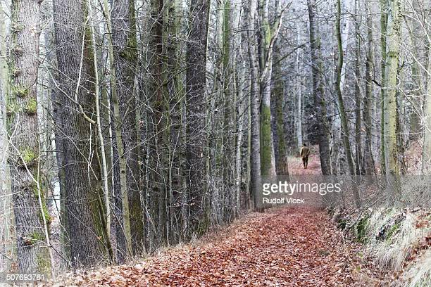 hunter walking a forest path - czech hunters stock pictures, royalty-free photos & images