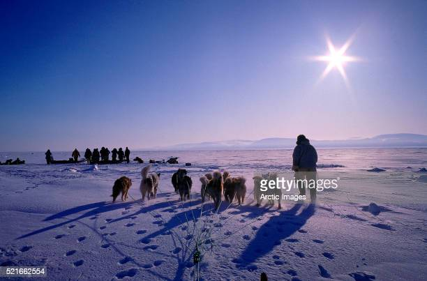 hunter with dog sled on snowy tundra - inuit stock pictures, royalty-free photos & images