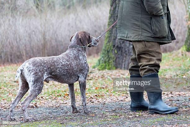hunter with german shorthaired pointer hunting dog - czech hunters stock pictures, royalty-free photos & images
