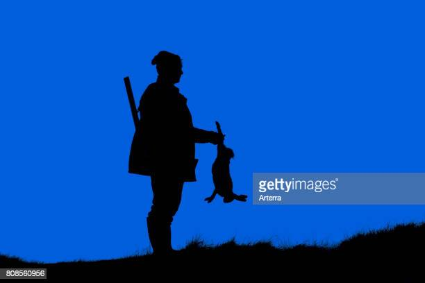 Hunter with gun holding killed brown hare silhouetted against sunset