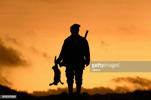 Hunter with gun holding killed brown hare silhouetted against sunset.
