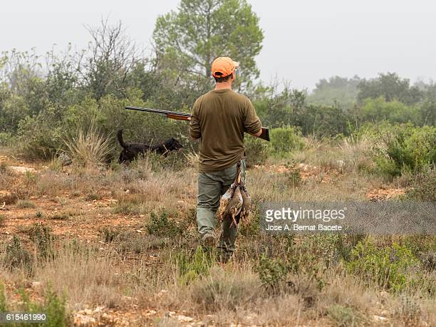 Hunter with his alert shotgun, walking along the field hunting partridges . (Alectoris rufa).
