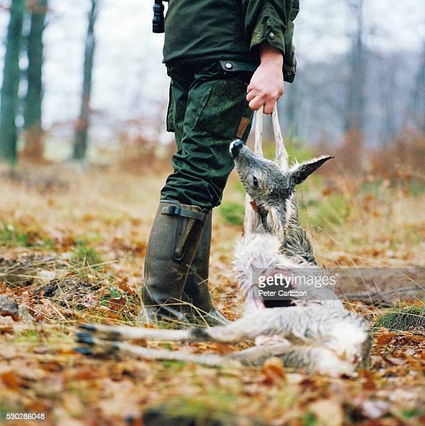 hunter with his prey - chevreuil photos et images de collection