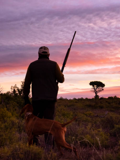 hunter with his shotgun and hunting dog in the mount, hunting partridges and rabbits. (braco hungaro) - guy with gun with colored sky stock photos and pictures