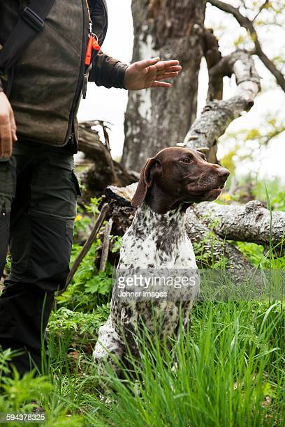 hunter with hunting dog - hunting dog stock pictures, royalty-free photos & images