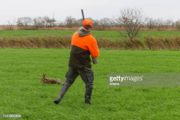 Hunter with rifle shooting fleeing brown hare in grassland during the hunting season in autumn