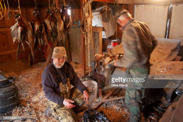Hunters cleans the birds from their days shooting near Minot North Dakota United States Prior to hanging the pheasants grouse and ducks he has shot...