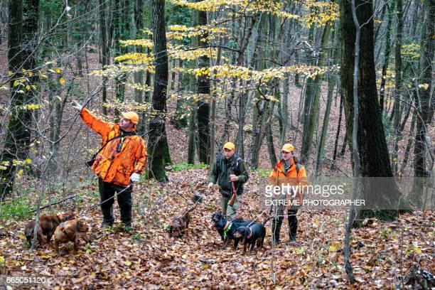 hunters in the forest - gruppo di animali foto e immagini stock