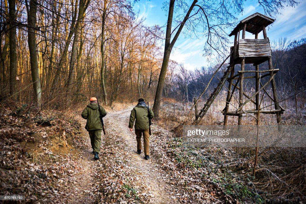 Hunters in the forest : Stock Photo