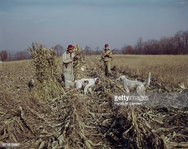 """hunters standing with rifle, looking at dogs in field "" - number of people stock pictures, royalty-free photos & images"
